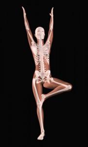 medical skeleton in a yoga position