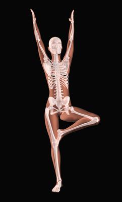 Continuing Education For Yoga Teachers in Denver