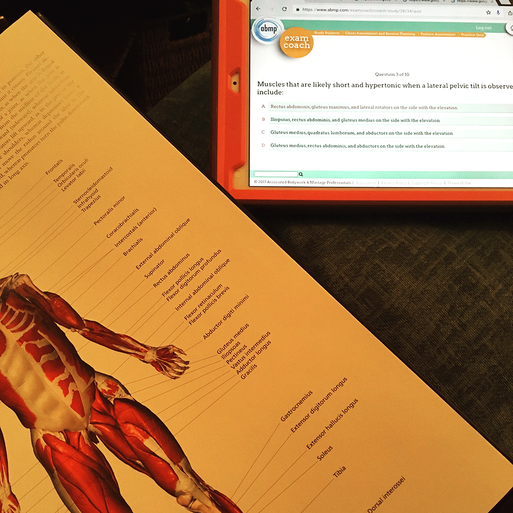 Anatomy & Physiology Studies in our 600-hr Massage Program